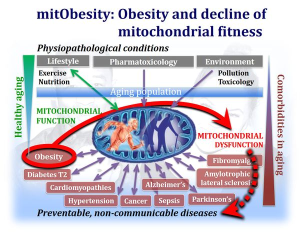 MitObesity-and-comorbidities.jpg